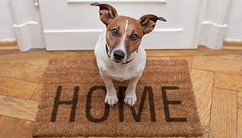 Finding pet friendly rentals in Orange County is easy!